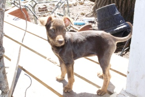 This shot of the brown and black puppy was taken on my parents' front porch. :)