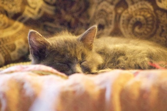 I took this shot from across the room as the kitten slept :).